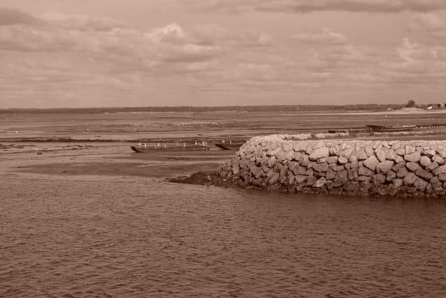 Marée basse Sépia