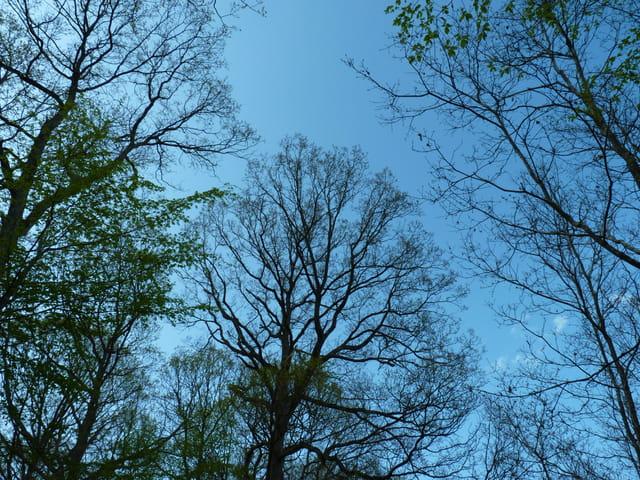 Méditation bleue