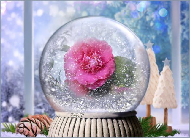 Même camélia enfermé dans une boule de neige