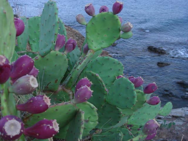 Mer et cactus