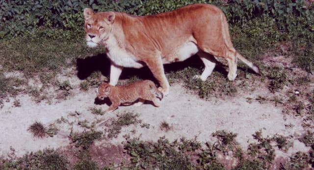Mère et son petit