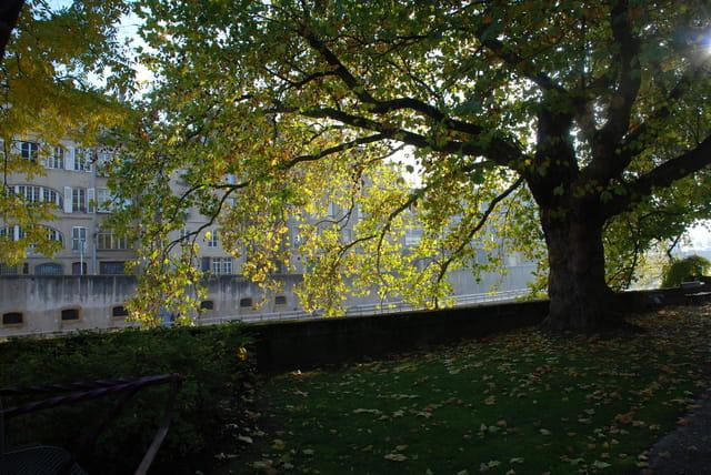 Metz en automne
