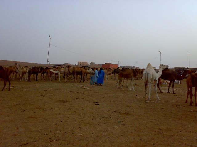(MHAIRICH)  souk des chameaux