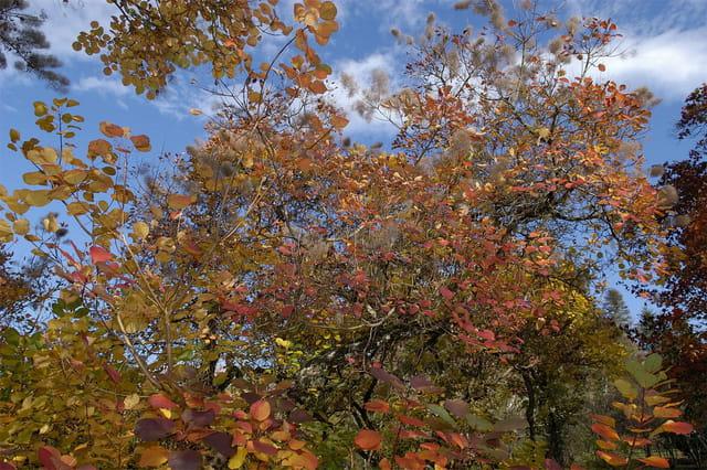 Mille couleurs d'automne