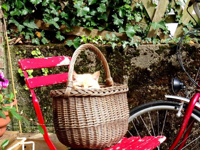 Mimi le Chat