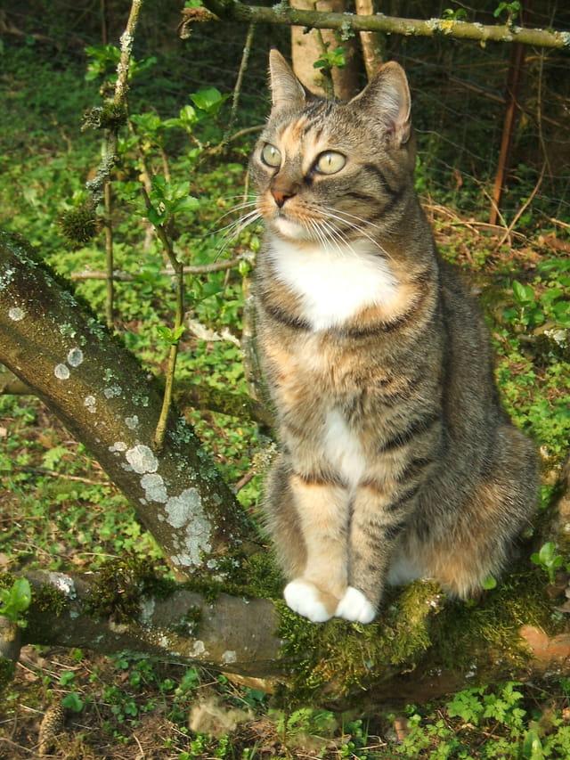 Mimine une chatte meusienne