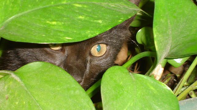 Mini panthère dans la jungle