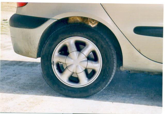 Minou se repose un pneu