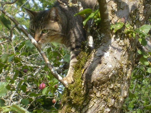 Mistigris dans l'arbre