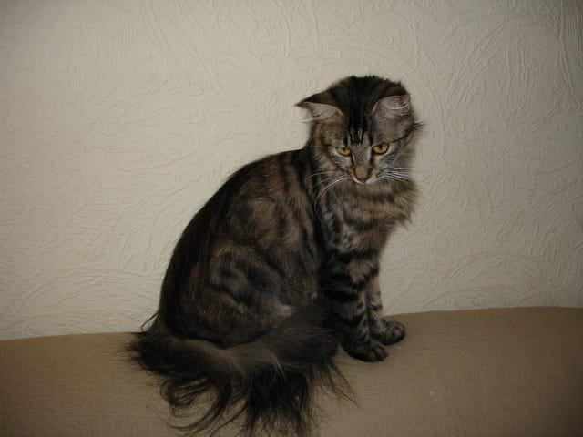 Mistinguette, la chatte de ma voisine