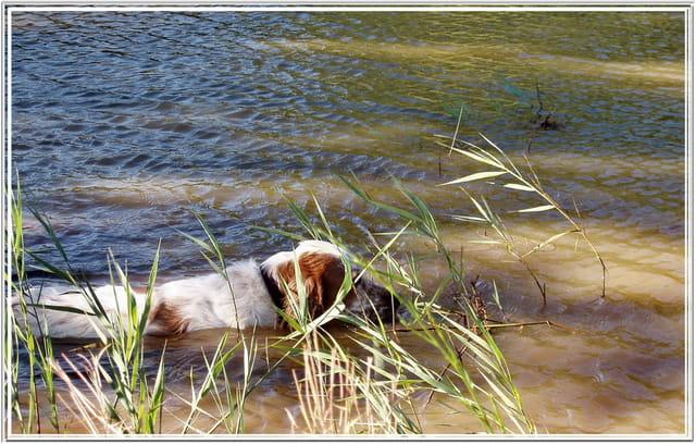 Mistral sur l'étang