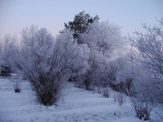 Mon arrière-cour en hiver
