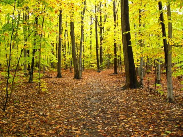Mon automne