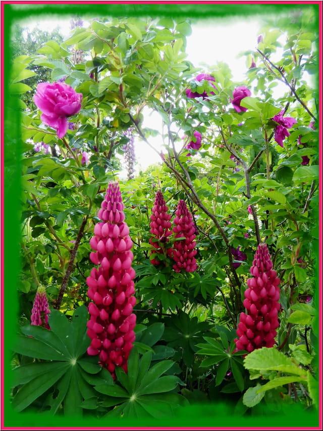 Mon fouillis de fleurs dans le jardin 3 par jacqueline for Fleurs dans le jardin