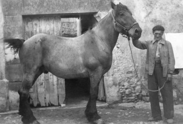 Mon grand père et son cheval