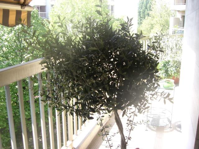 Mon olivier