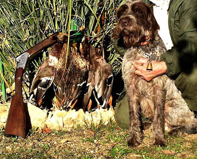 Mon vieux chien avec ses derniers canards