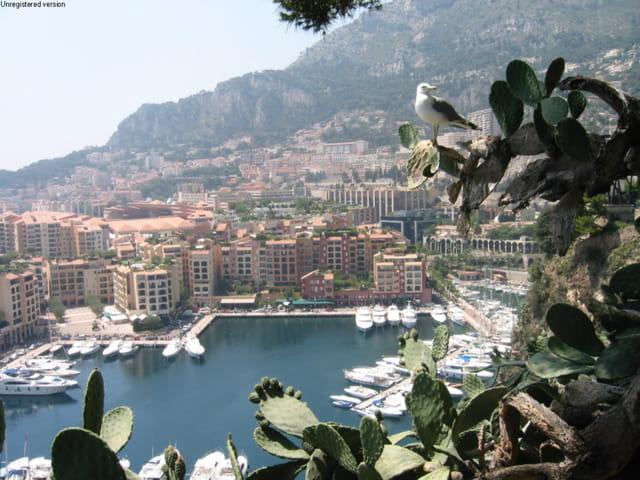 Monaco sous l'oeil de la mouette