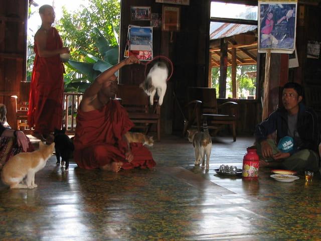 Monastère des chats sauteurs