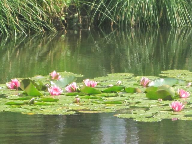 Monet à Giverny