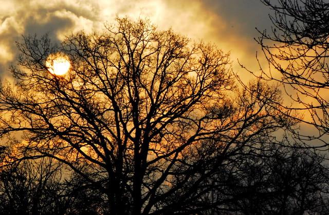 Monseigneur l'astre solaire par un frais matin d'hiver