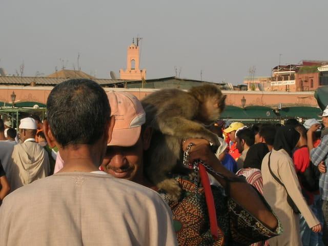 Montreur de singe