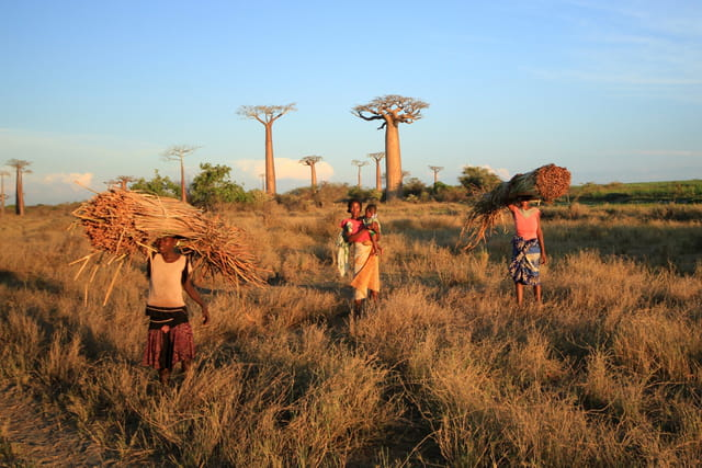 Morondova l'allée des baobabs