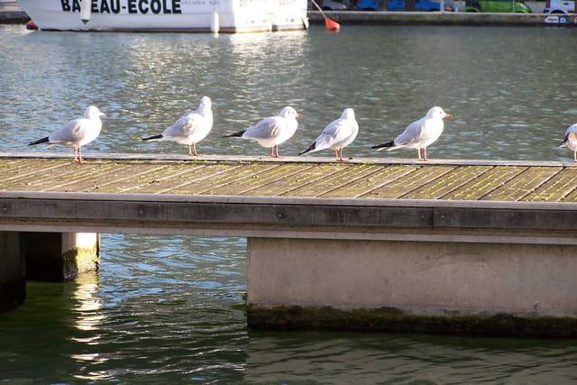 Mouettes à Paris
