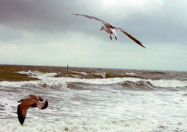 Mouettes dans la tempête