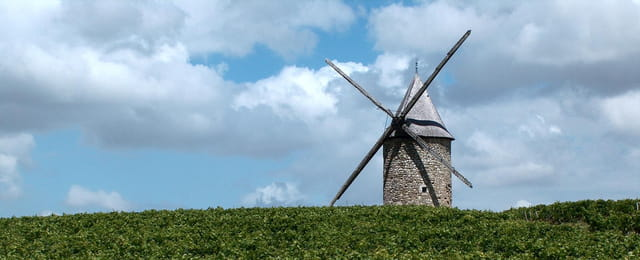 Moulin dans les vignes