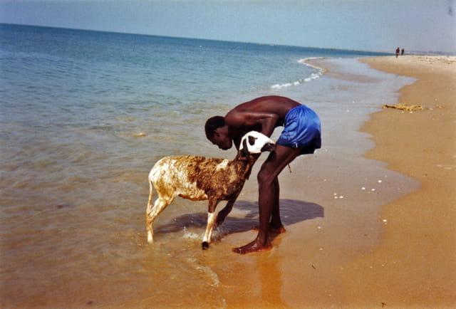 mouton a la mer