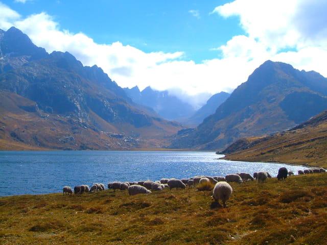 Moutons avec montagnes