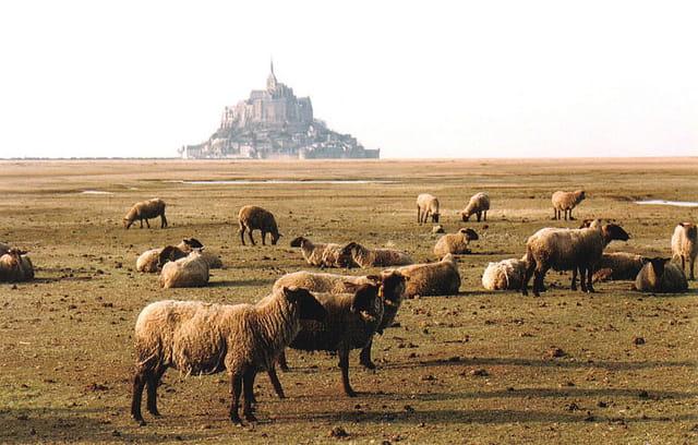 """Moutons """"prés salés"""""""