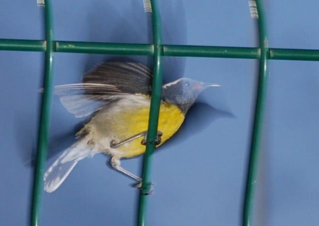 Mouvement d'ailes