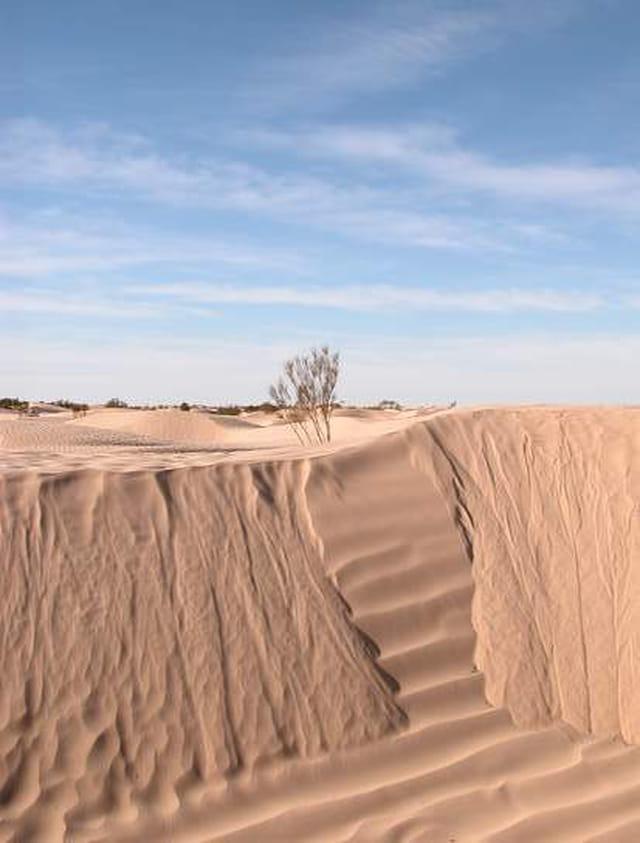 Mouvement dans le désert