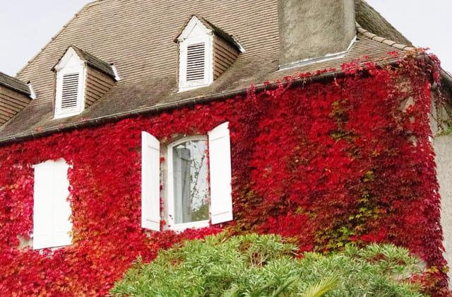 Mur de feuilles
