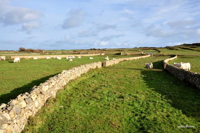 murets fields