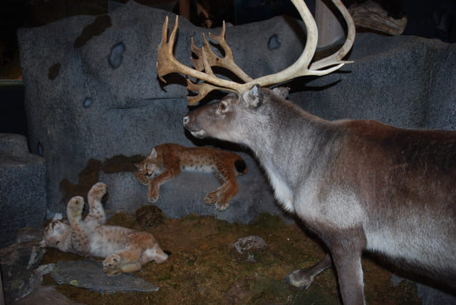 musée du parc national de Jostedal