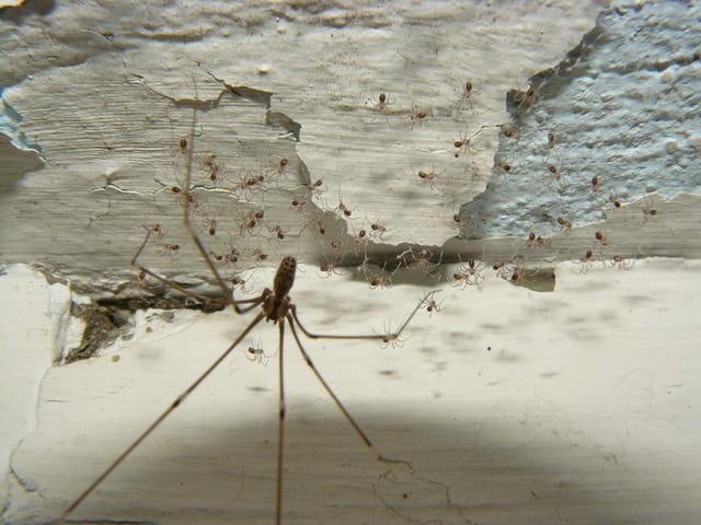 Naissance d'araignées