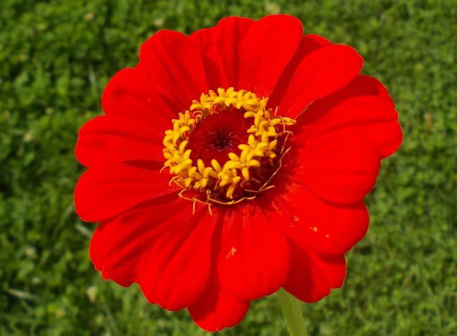 Naissance d'une fleur.