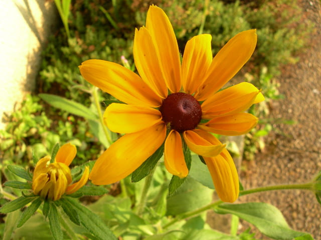 Naissance d une fleur ......