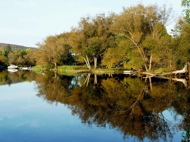 Narcissime des arbres sur le bord du Lac Massawippi