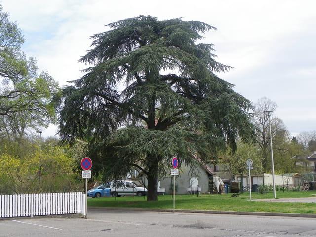 Nature dans la ville