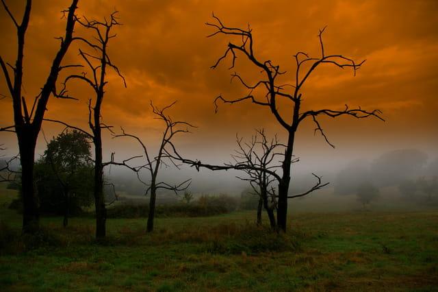 Nature en folie