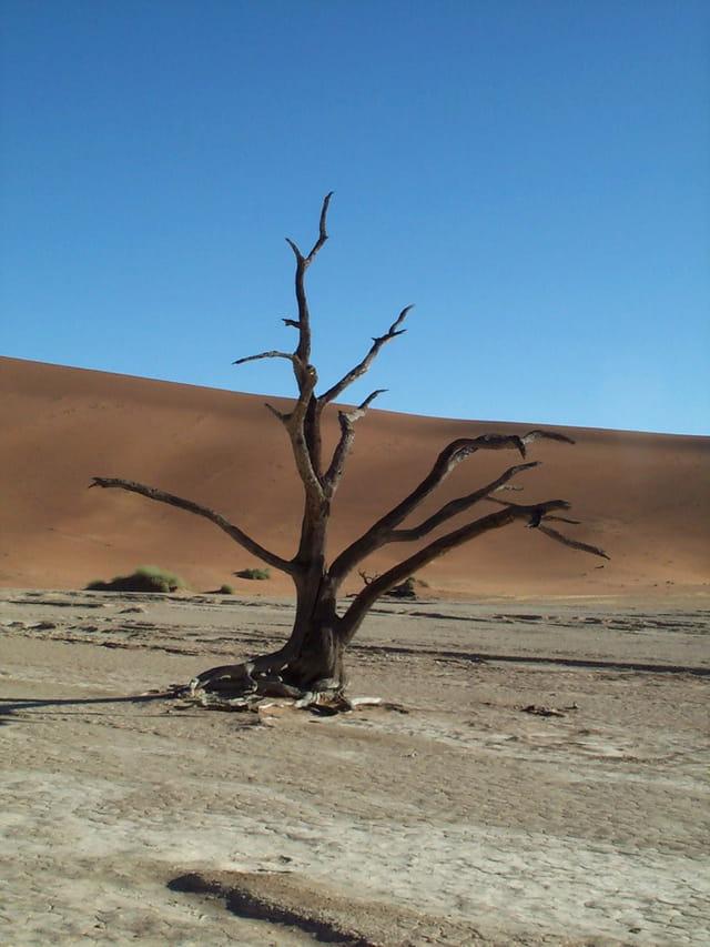 Nature Morte ;)