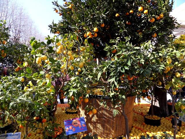 Ne pas toucher aux fruits (2)