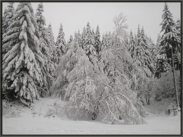 Neige dans les Vosges