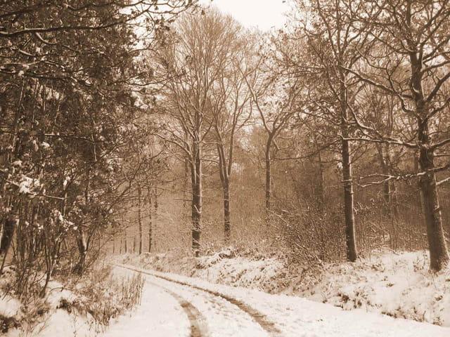 Neige de novembre