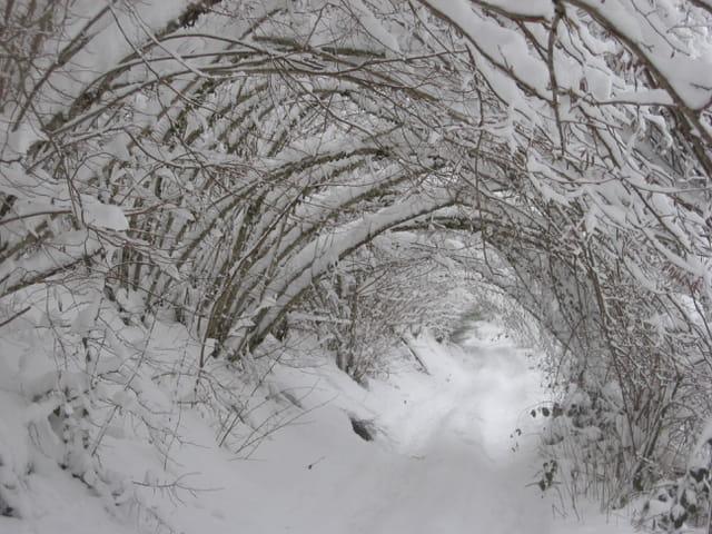 Neige en sous-bois