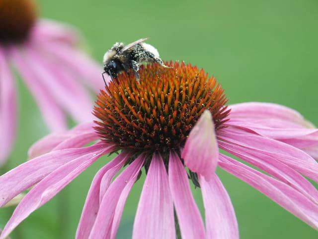 Neige ou pollen ?